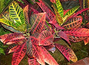 Цветок с рваными листьями